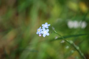 Very Tiny Flowers 2 by chamberstock