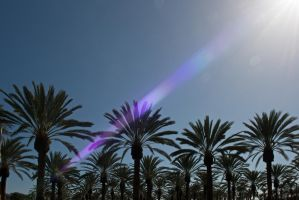 sea of palms under the sun by illicitDreamer
