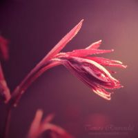 Ethereal by TammyPhotography
