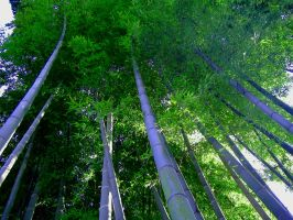 Canopy by Satsukeshi
