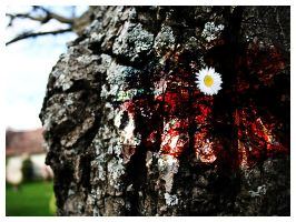 blood splashed on a tree.. by d4rkii