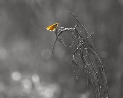 Twig by firesign24-7