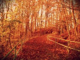 Fall by KippoKip
