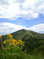 Mount Sentinel Sunflowers by Raulboy