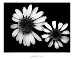 Simplicity of Black and White by zippzopp