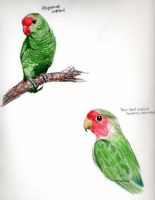 Lovebirds by plaidcat