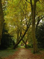 autumn path between old trees by Nexu4