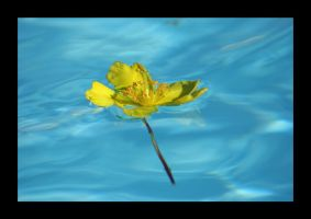 Floating yellow by xanderking