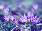 Wake up, Crocus. by Lukreszja