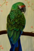 Military Macaw by Golphee