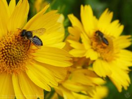 Bees on flowers by resh11ka