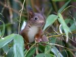 Squirrel 184 by Cundrie-la-Surziere