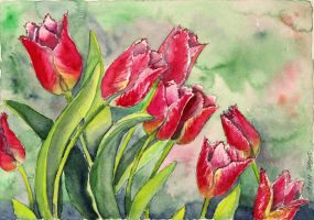Tulips by solgas