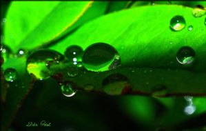 green drop by Zlata-Petal