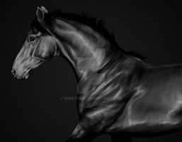 Horse Sketch by wideturn