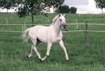 Warmblood Mare Trotting Pasture Stock by LuDa-Stock