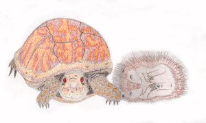 Turtle and Hedgehog by alanat