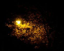 Nightlight for Fall Leaves by botskey