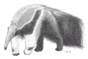Giant Anteater by Zenity