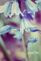 Purple Bells by ceciliay
