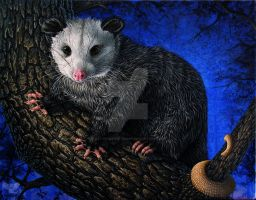 Pluto opossum by ART-fromthe-HEART