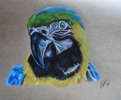 ArtCrossing 7: Blue and Gold Macaw by Lucky101212