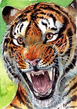 Watercolor - Tiger (ACEO) by NadiavanderDonk