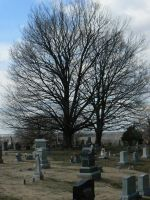 2 Trees and tombstones by BohemianHarlot