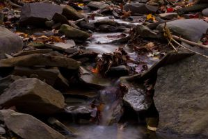 Stream with leaves by JacketBird