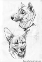 Dogfaces by TheKunterbunter