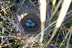 Baby Birds 3 by Salamander-Stock