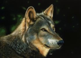 Golden wolf scratchboard by shonechacko