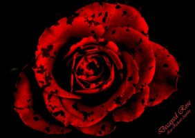 Decayed Rose by DreamMedia-UK
