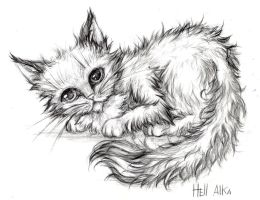 cat by Hell-Alka