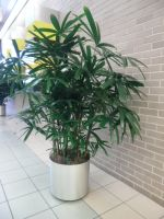 Potted Plant, series 2 by JinzouTamashii