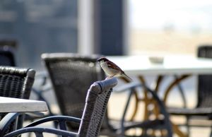 Zandvoort beach sparrow by pagan-live-style