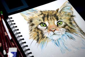 A Cat with Green Eyes by Alina-Kurbiel