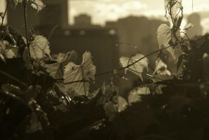 Cleveland Leaves by coffeenoir