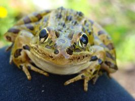 Ribbit, the frog. by creativsis