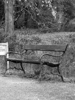 A park bench by Piok