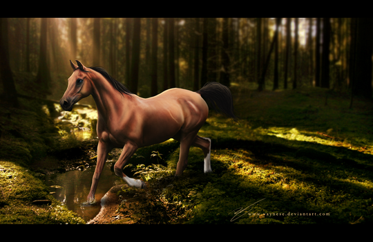Forest trot by Vaynese