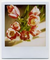 TULIPES by redmonolithe