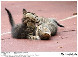 Playing Kittens by Della-Stock