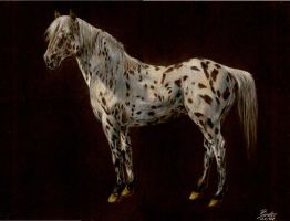Appaloosa by MillyIsDreaming