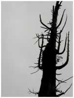Untitled Tree Silhouette by luckydonut