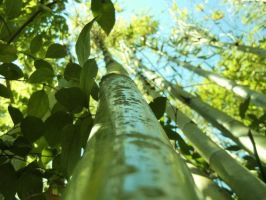 Bamboo II by BaileyBeanSprout