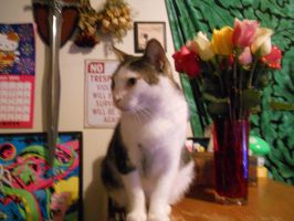 Milly with roses by Saphira001