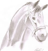 Horse Portrait by Axelroxsox
