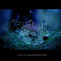 Spider Art by DREAMCA7CHER