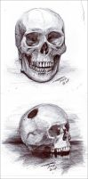Human skulls 01 by black-griffel